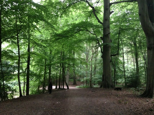 Whippendell Woods, Watford, Hertfordshire - England, UK (Naboo Forest)