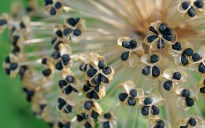 Fibonacci Sprouted