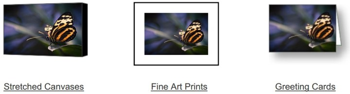 Tip Toe Tiger on Fine Art America