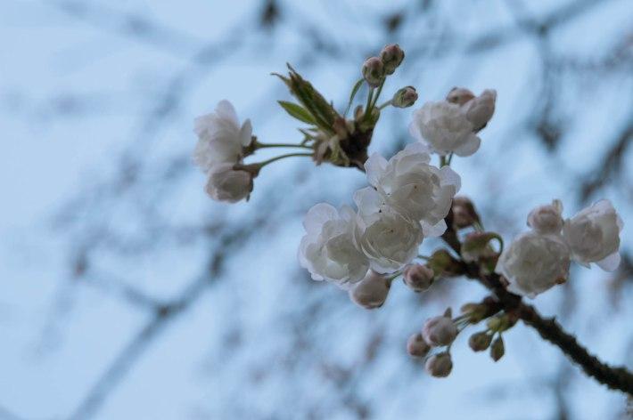 Spontaneous Spring Blossoms