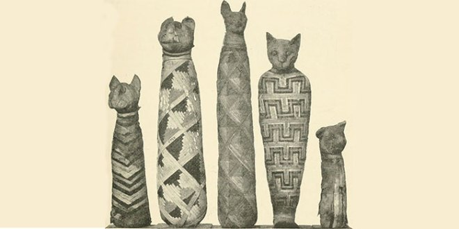 Sketch of mummified cats from the British Museum: A Guide to the Third and Fourth Egyptian Rooms, Natural History Museum, London