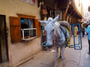 Local transport in Fez