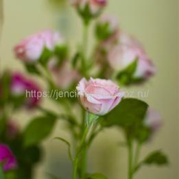 Скромный букет роз