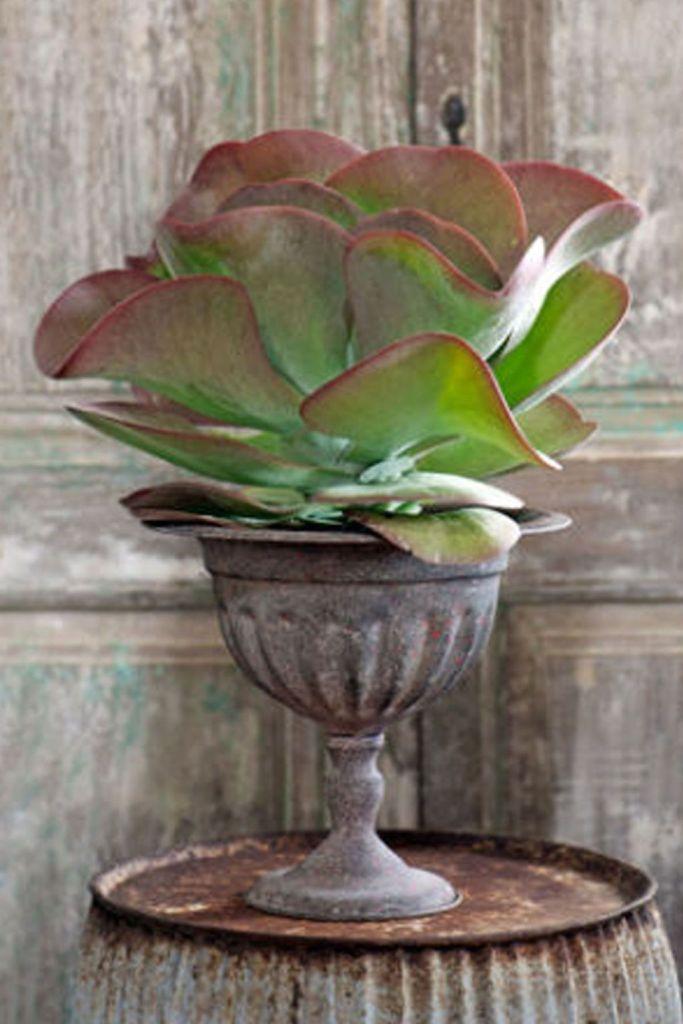 tanaman hias apartemen