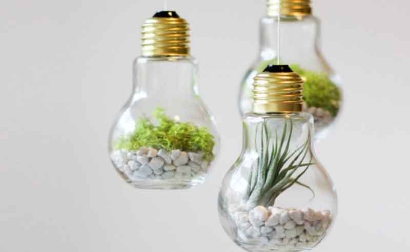 hidroponik light bulbs