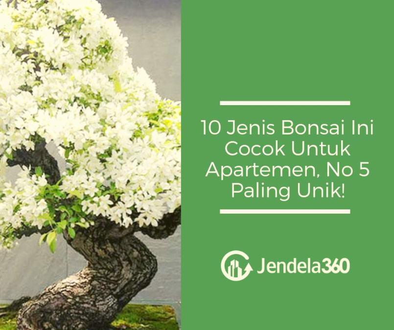 10 Jenis Bonsai Ini Cocok Untuk Apartemen, No 5 Paling Unik!