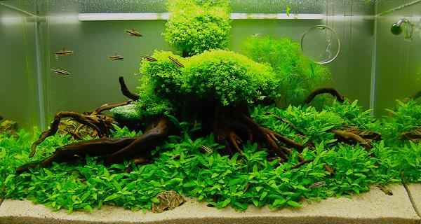 tutorial membuat aquascape