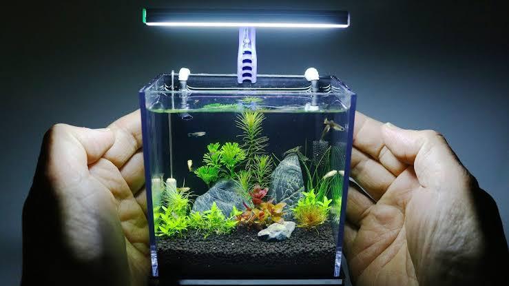 cara membuat aquarium mini
