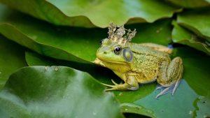 Jenis dan Contoh Hewan Amfibi Yang Ada di Indonesia
