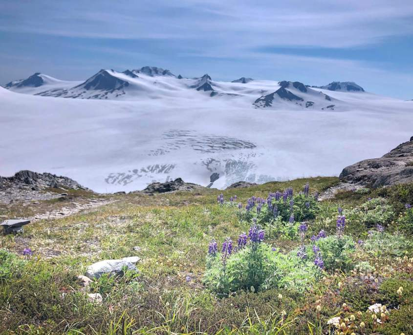 Kenai Fjord National Park, Harding Icefield trail