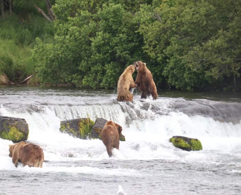 Brooks Falls, Katmai National Park