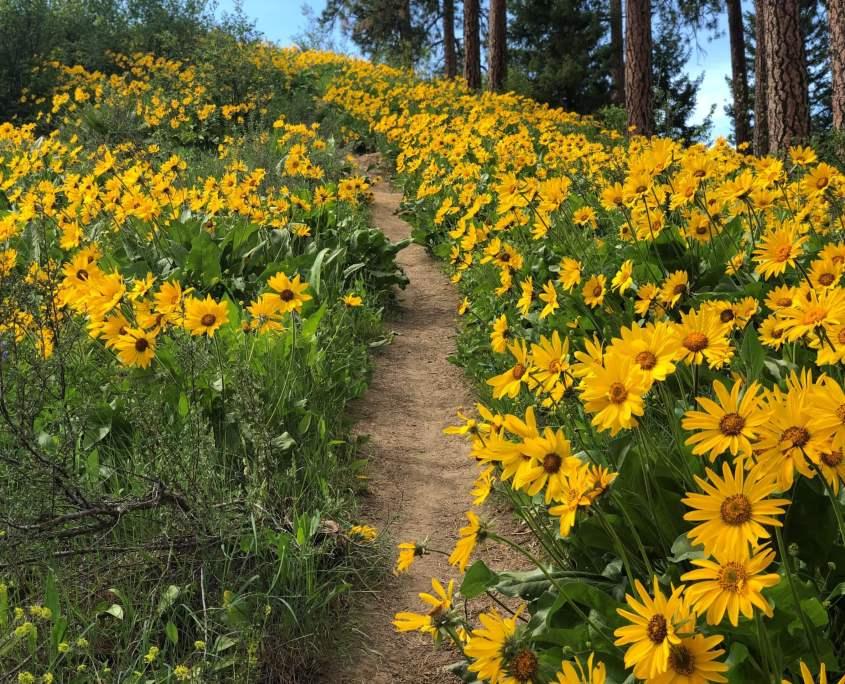 Ski Hill Hiking Trail in Leavenworth, WA