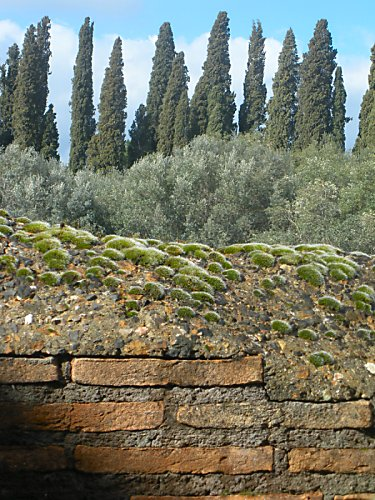 From Hadrian's Villa: Bricks, moss, olive trees, cypress trees, clouds, and sky.