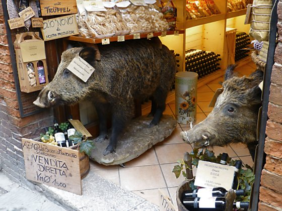 Stuffed wild boars adorn the doorway of a shop in San Gimignano.