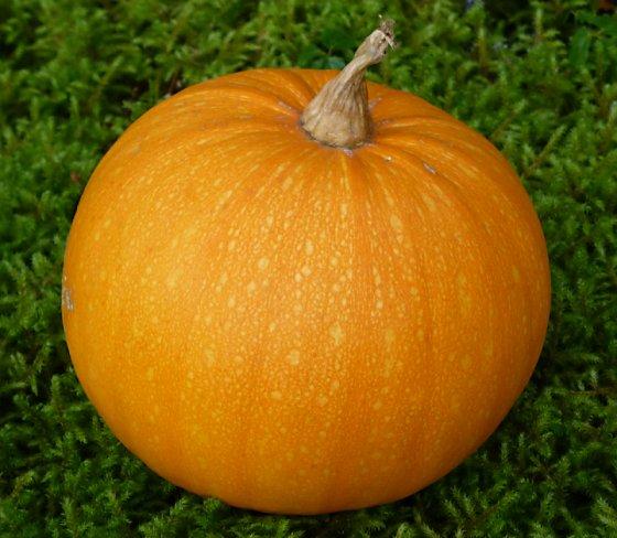 My ripe pumpkin