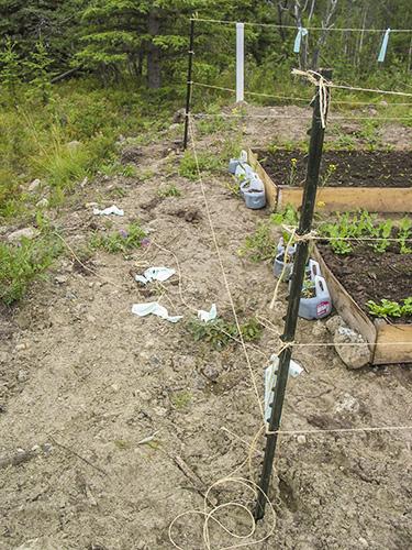 Broken string where moose walked through the fence.
