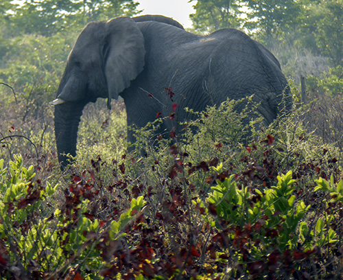 Elephant by the side of the road
