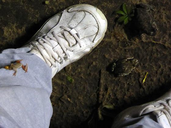 One frog on my pantleg and two between my feet.