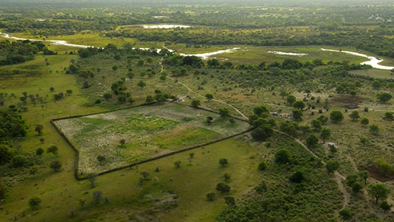 Rural homes outside Maun, Botswana.