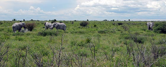 Four elephants hanging out together.