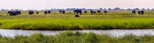 Hippo and Elephants grazing along the Chobe River.