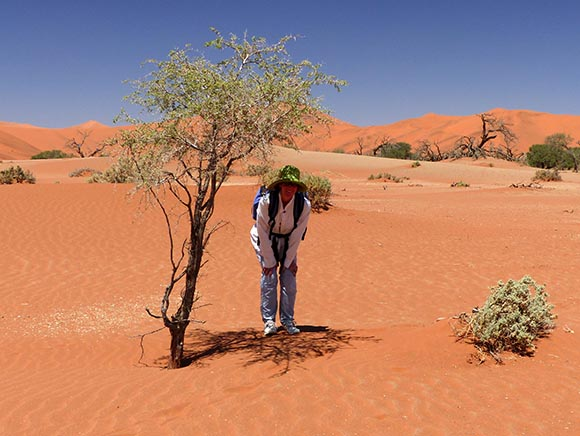 Jen's Shade, Namib-Naukluft National Park