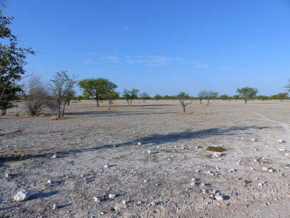 No understory, Etosha National Park
