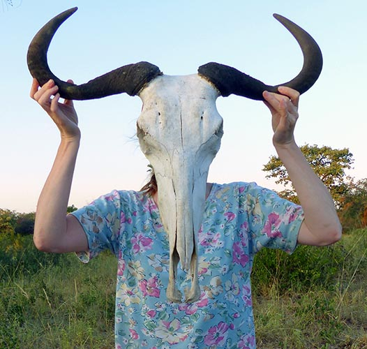 Wildebeest horns, Mangetti National Park