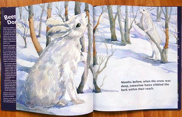 Snowshoe Hares in Been There, Done That: Reading Animal Signs