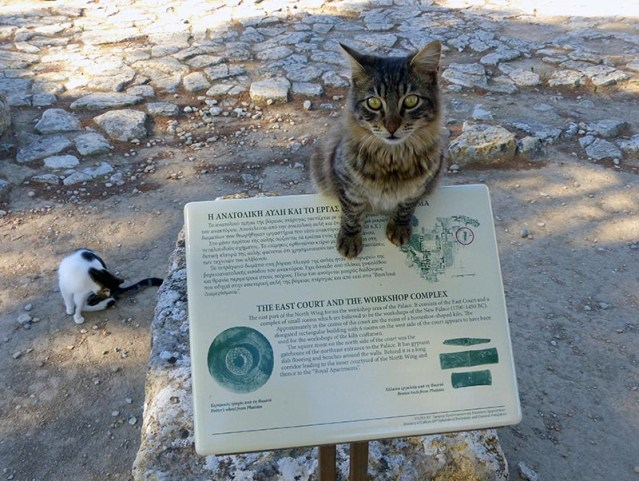Cats in ancient ruins in Greece - Jen Funk Weber