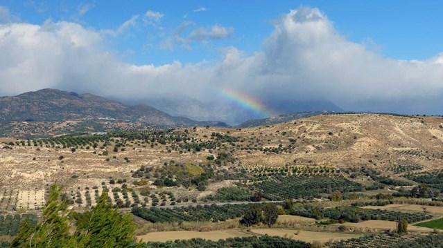Olive trees on the countryside, Crete, Greece - Jen Funk Weber