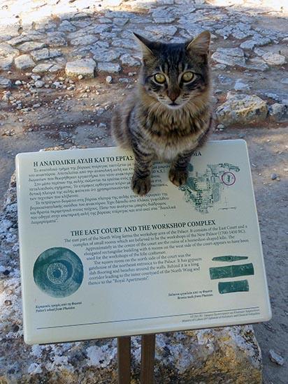 Phaestos feline guide 3, Crete, Greece - Jen Funk Weber