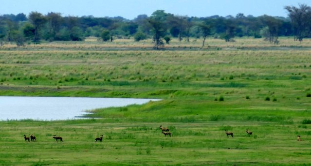 African wild dog pack, Chobe National Park, Botswana