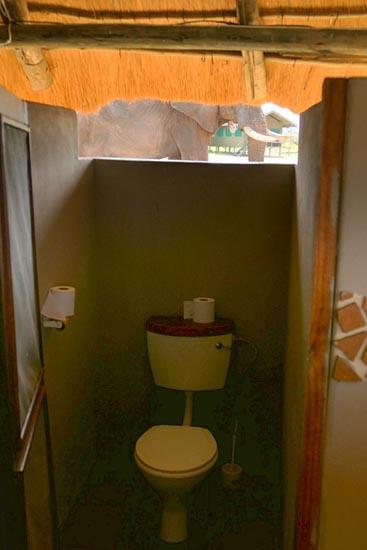 Toilet with elephant outside, Elephant Sands, Botswana