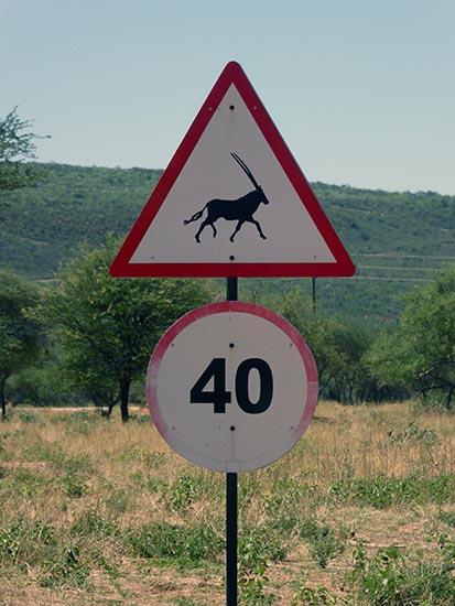 Gemsbok, oryx, animal sign in southern Africa