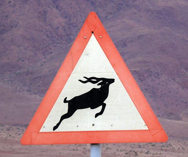 Kudu, animal sign in southern Africa
