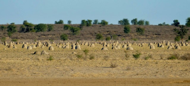 Ant hills in Kgalagadi Transfrontier Park, photo by Mike Weber