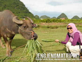 Jauh-jauh ke China cuma untuk ngasih makan kebo