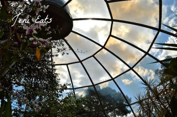 Botanical Sky Lights.jpg