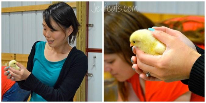 Chicks Collage