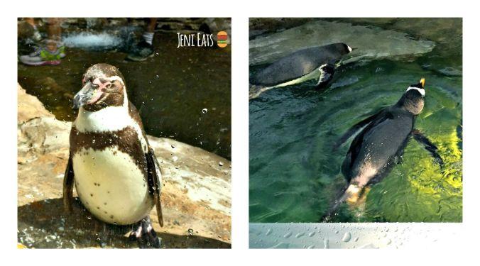 penguin Collage