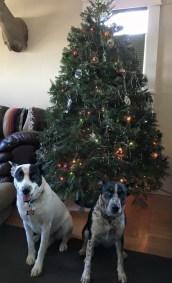 Shaw Family Christmas Tree