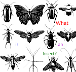 PPT on insects for second grade at JES April 7, 2015