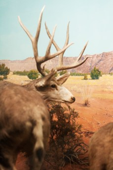 The American Diorama Hall of the Yale Peabody Museum