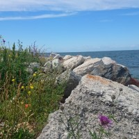 We Went To Gotland! (Part 1)