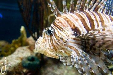 JLongo_Aquarium_1052_web