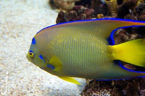 JLongo_Aquarium_1386_web
