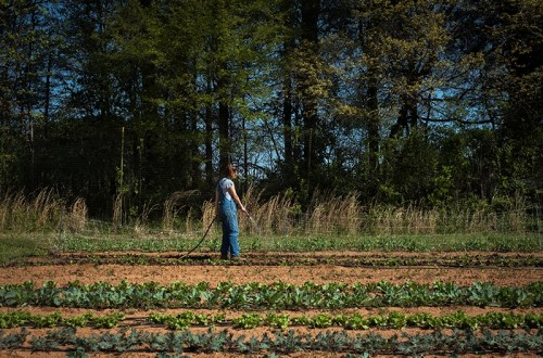 Davidson College's Farm May Be Its Most Coveted Classroom
