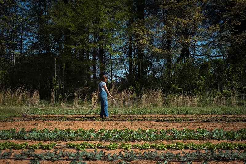 Davidson College Farm