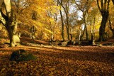 Epping Forest3
